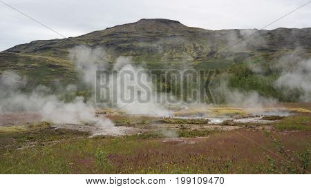 A lot of active steaming geysers on geyser field in Iceland as a part of Golden Circle