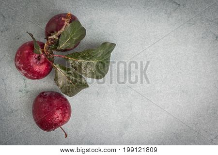 Branch of delicious red plums on a background