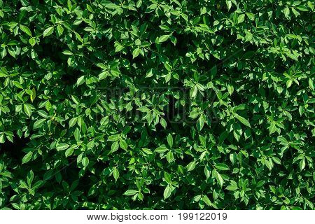 Tiny green leaves background, leaves wall texture