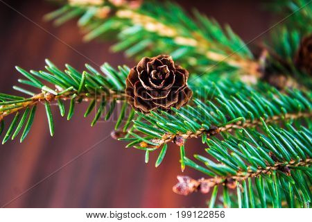 Bump On The Christmas Tree Branch