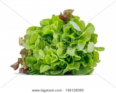 Organic green and red lettuce leaves, isolated on a white background. A big bouquet of healthful salad leaves. Natural nutritious ingredients for diets. Summer harvest.