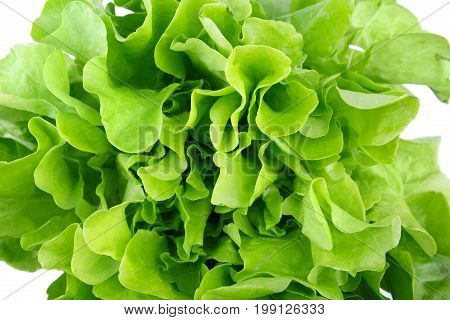 Close-up of organic green lettuce leaves, isolated on a white background. A big bouquet of healthful salad leaves. Natural nutritious ingredients for diets. Summer harvest.