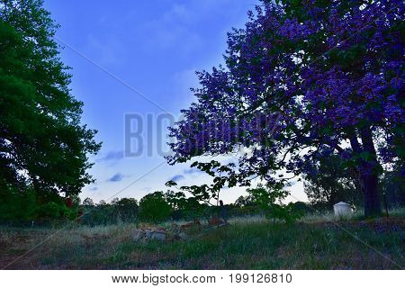 Australian bush landscape in the blue hour. Trees and grass land in the Perth Hills in Chidlow, Western, Australia