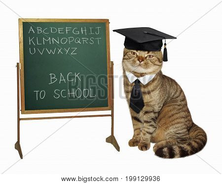 The cat teacher with hat and a tie wrote the alphabet on the board. White background.
