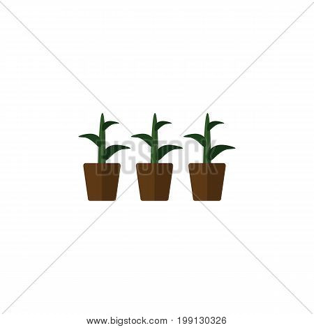 Flowerpot Vector Element Can Be Used For Plant, Flowerpot, Botany Design Concept.  Isolated Plant Flat Icon.