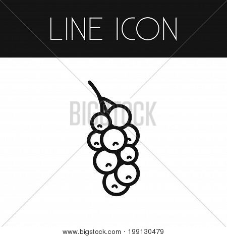 Currant Vector Element Can Be Used For Currant, Redcurrant, Red Design Concept.  Isolated Redcurrant Outline.