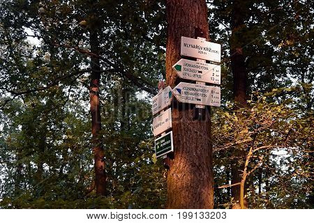 Dubicky Czech republic - July 08 2017: tourist signs on tree in Czech central mountains in sommer sunset