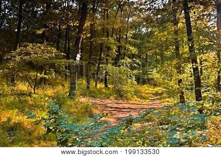 Forest path to Mlynaruv Kamen view in Czech central mountains tourist area in sommer sunset