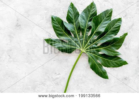 Big leaf of tropical plant on light grey background top view.