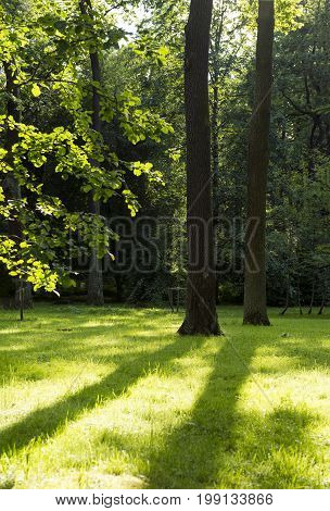 meadow with green grass and shadows sunlight trees greenery foliage