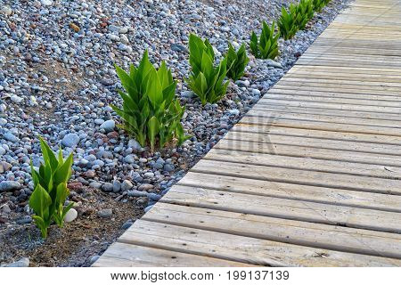 bushes of flower leaves and wooden flooring closeup on the pebble beach with sharpness in the foreground