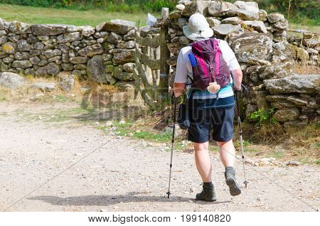Alone Pilgrim Wearing A Hat A Backpack And A Typical Pilgrim Scallop In Camino De Santiago