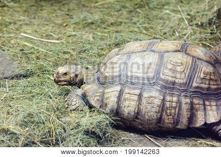 Turtles walking on grass slow green old.