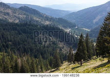 Mountain valleys, beautiful landscape with firs and winding road. Romania, Transylvania.
