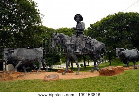Waco, Texas - July 21, 2017: The Waco Cattle Drive, by Artist Robert Summers consists of 28 bronze sculptures that are life-size and a half depicting cowboys herding longhorn cattle