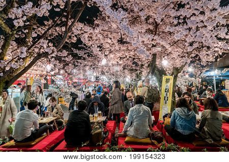 KYOTO JAPAN - APRIL 7 2017: Japan crowds enjoy the spring cherry blossoms in Kyoto by partaking in seasonal night Hanami festivals in Maruyama Park at Kyoto Japan.