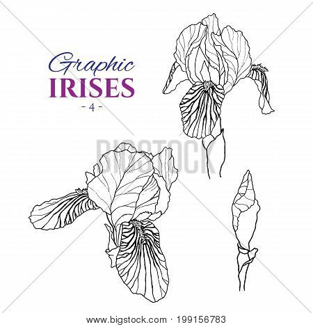 Graphic illustration of irises from different angles, set part 4. Hand drawn flowers and buds in line art style. Beautiful blossoms for romantic design of wedding invitation, advertising, booklets.