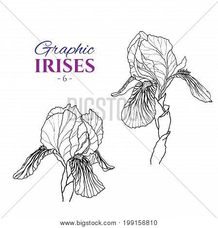 Graphic illustration of irises from different angles, set part 6. Hand drawn flowers and buds in line art style. Beautiful blossoms for romantic design of wedding invitation, advertising, booklets.