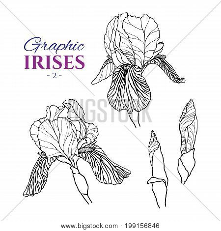 Graphic illustration of irises from different angles, set part 2. Hand drawn flowers and buds in line art style. Beautiful blossoms for romantic design of wedding invitation, advertising, booklets.