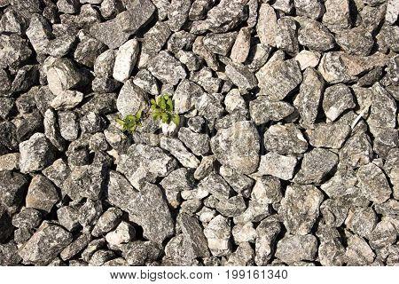 Natura, Life, plant, rock, gravel, tree, arbour