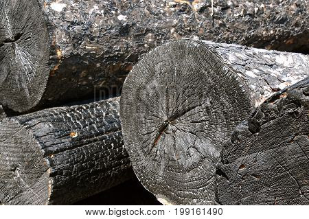 End grain of blackened charred logs after a fire