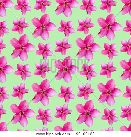 Apple flowers. Texture of flowers. Seamless pattern for continuous replicate. Floral background photo collage for production of textile cotton fabric. For use in wallpaper covers