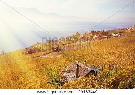Vineyards in Lavaux against Geneva lake, Switzerland