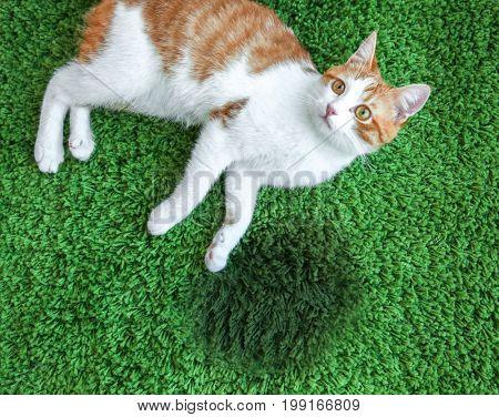 Cat lying on carpet near wet spot