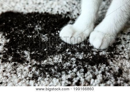 Scattered soil on white carpet and cat's paws, close up