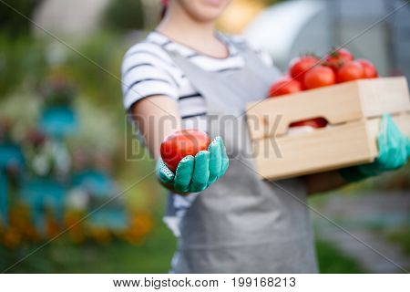 Agronomist woman with red tomatoes