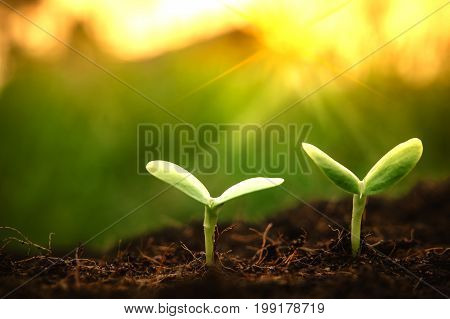 Young plants begin small growing in soil ecology earth new world from seed saving protection of tree spring summer care and nature sun light to leaf background.