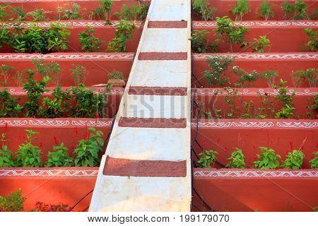 Plants arrangement between red walls