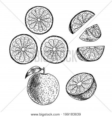 Hand drawn set of orange. Retro isolated sketches. Vintage collection. Linear graphic design. Slices of orange. Black and white image of fruit. Vector illustration.