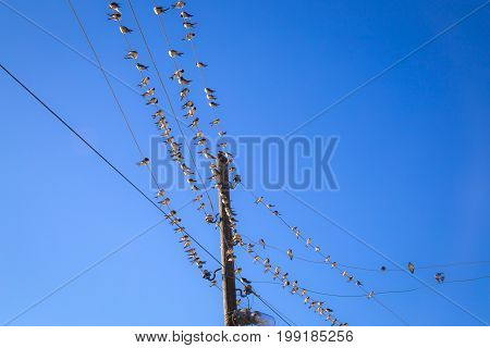 Swallows On A Wire