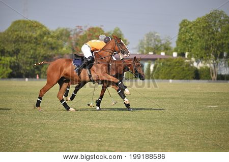 Horse Polo Player battle in polo game.