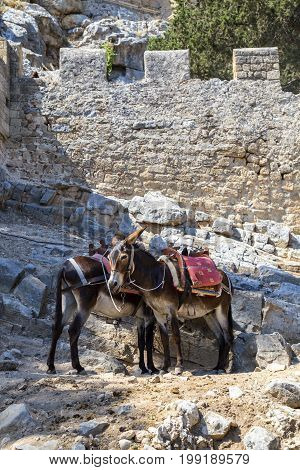 Donkeys Waiting To Carry Tourists