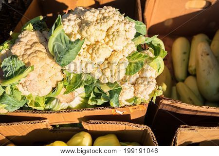 Close up shot white cauliflower in cardboard box on market