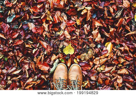 Fall autumn leaves and brown shoes. Conceptual image of legs in brown boots on the autumn leaves.