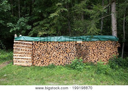 Covered Firewood In Forest