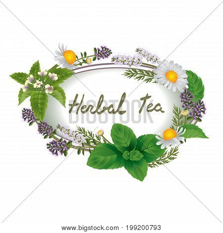Vector oval ornament of herbs and flowers for labels of herbal tea with calligraphic inscription