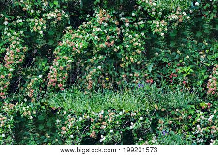 Seamless Green Background Texture With Bushes Flowers And Grass