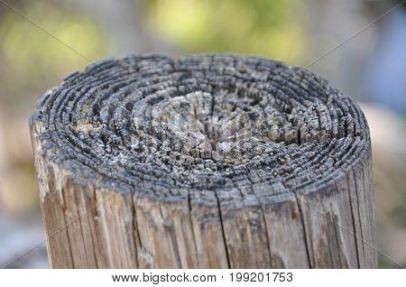 macro shot of wooden stump with bokeh in background