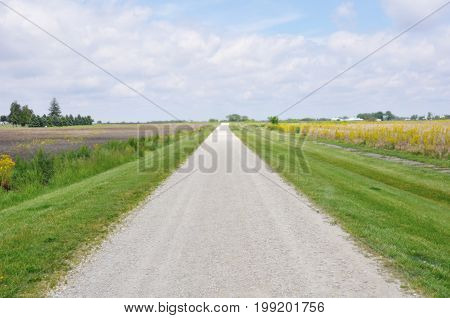 Road through the green field with sky in background