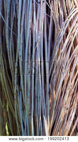 Brushwood Texture Of Straight Twigs As A Background