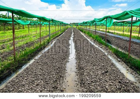 Healthy and clean Organic Farm Raw material vegetables in organic farming.