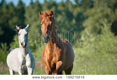 horses running on freedom in the forest