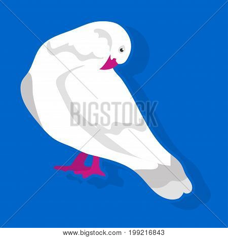 Vector illustration of white bird sitting and cleaning feathers on blue background.
