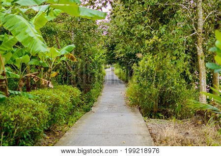 Concrete Pathway Or Walkway In Jungle Forest