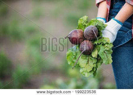 Farmer Holding Beets In Field