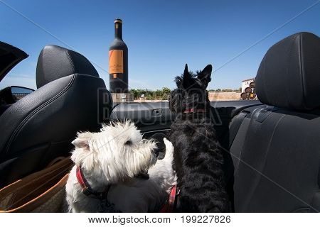Dogs On Wine Tour
